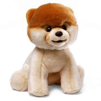 Boo Worlds Cutest Dog